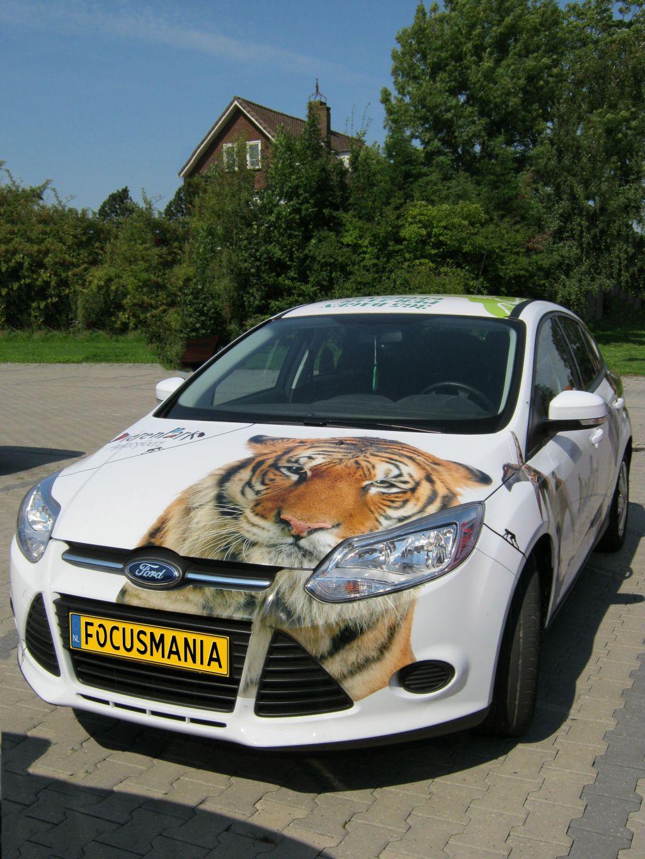 Ford Focus Dierenpark Amersfoort